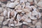 Hà Tĩnh: Hết cá biển đến ngao nuôi chết hàng loạt