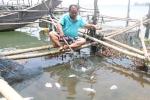 Thừa Thiên - Huế: Cá lồng nuôi chết hàng loạt trôi dạt vào bờ