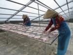 Đồng Tháp: Hướng đến sản phẩm khô cá lóc,cá sặc rằn an toàn