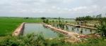 Đồng Tháp: Nuôi cá ngoài quy hoạch và xả nước thải ảnh hưởng đến sản xuất lúa