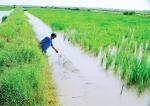 Sóc Trăng: Đề xuất giải pháp nuôi tôm thích ứng điều kiện hạn, mặn