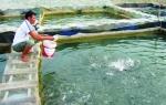 Thế mạnh nuôi cá lồng bè tại Phú Thọ
