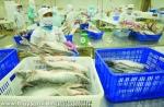 Cá tra Việt Nam đang có lợi thế trên đất Mỹ