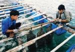 Hiện trạng và giải pháp cho môi trường thủy sản