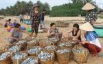 Phú Yên: Hải sản rớt giá, ngư dân khó khăn