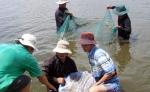 Phú Yên: Trên 77,5 ha diện tích nuôi tôm thẻ chân trắng bị bệnh