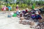 Quảng Nam: Ngư dân gặp khó vì giá mực giảm sút