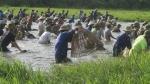 Hàng ngàn người dân đội nắng 39 - 40 độ C bắt cá cầu may