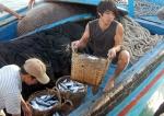 Đà Nẵng: Phê duyệt dự án cảng cá động lực