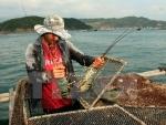 Phú Yên: Xác định nguyên nhân tôm hùm, cá mú chết hàng loạt