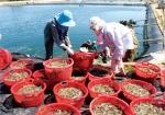 5 góc nhìn ngành tôm Việt
