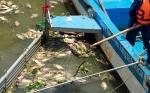 Truy tìm nguồn ô nhiễm gây chết cá ở Bình Chánh