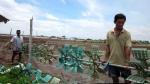 Bình Định: Hơn 32 ha diện tích tôm nuôi bị bệnh
