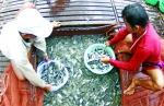 Vùng, cơ sở nuôi trồng thủy sản an toàn dịch bệnh