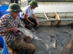 Tây Nguyên: Làm giàu từ cá giống