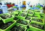 Vẫn rộng cửa xuất khẩu tôm