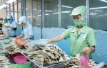 Phú Yên: Đẩy mạnh chuỗi liên kết cá ngừ