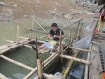 Hòa Bình: Khuyến cáo giảm tình trạng cá nuôi bị chết