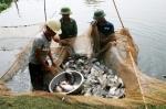 Hải Dương: Nuôi thủy sản theo hướng an toàn