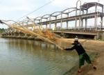 Bến Tre: Lùng nhùng mặn ngọt Ba Lai