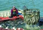 Mỹ: Thị trường cá da trơn ít biến động