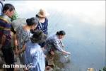 Thừa Thiên - Huế: Cá chết trên sông An Cựu do ô nhiễm hữu cơ cục bộ
