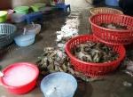 Cà Mau: Thu giữ hơn 70 kg tôm có tạp chất