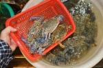 Hà Tĩnh: Nhiễm độc hải sản ở mức cao