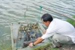 Thừa Thiên Huế: Triển khai nhiều mô hình hiệu quả