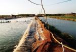 Ô nhiễm nguồn nước thủy sản