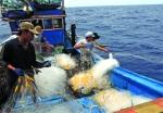 Nam Định: Bảo vệ thủy sản mùa mưa bão