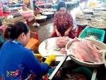 Hậu Giang: Giá cá thát lát giảm mạnh