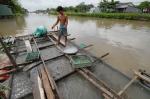 Bình Phước: Giá cá tăng trở lại