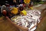 TP Cần Thơ: Thu hoạch 89.286 tấn thủy sản