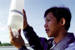 Ninh Thuận: Kiểm soát tốt chất lượng tôm giống