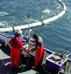 Sử dụng DNA để phát hiện ra cá bống Ponto-Caspian