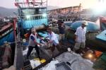 Đà Nẵng: Giảm số lượng tàu cá công suất dưới 20 CV