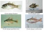 Nhận diện 154 hải sản tầng đáy tại 4 tỉnh miền Trung (Phần 2)