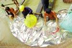 ĐBSCL: Người nuôi cá tra liên tục gặp khó
