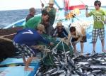 Phú Yên: Tăng cường giải pháp khai thác bền vững