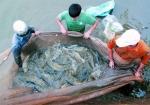 Quảng Ninh: Sản lượng thủy sản huyện Vân Đồn tăng mạnh