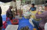 Rút lồng bán tôm hùm vì lo ngại mùa nước bạc