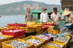 Quảng Bình: Toàn tỉnh có 30 cơ sở thu mua có hải sản tồn kho