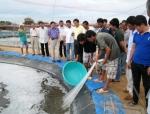 Cà Mau: Năm 2020, Đầm Dơi có 6.000 ha tôm công nghiệp