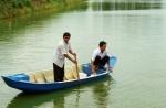 Đồng Tháp: Giá cá tra giống tăng mạnh trở lại