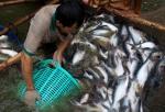 Lấy lại vị thế của ngành nuôi trồng thủy sản