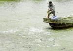 Cá tra tăng giá, người nuôi chưa mừng