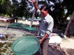 Quảng Nam: Ô nhiễm môi trường trong nuôi tôm