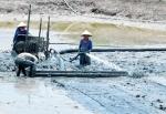 Cà Mau: Khó đạt chỉ tiêu nuôi trồng thủy sản năm 2016