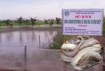 Kiên Giang: Nuôi cá chạch bùn - Hướng phát triển mới trong nuôi trồng thủy sản nước ngọt